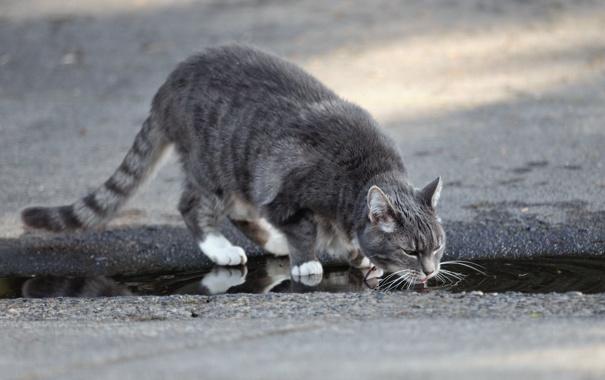 Фото обои кошка, вода, улица