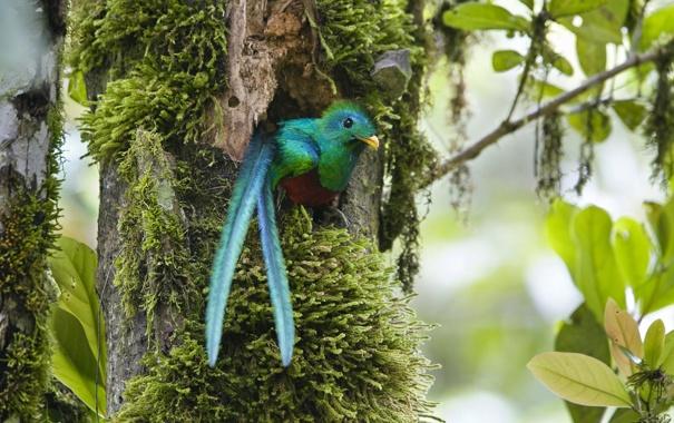 Фото обои птица, хвост, дупло, зеленая птичка