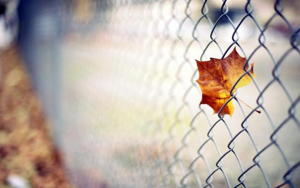 Фото обои осень, листья, оранжевый, сеть, листва, цвет, размытость