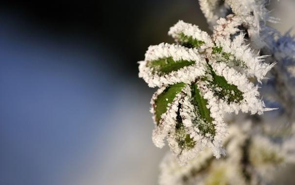 Фото обои зима, иней, листья, макро, снег, фото, зимние обои