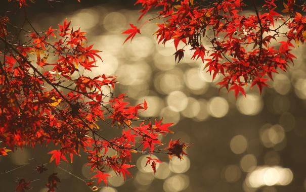 Фото обои осень, листья, вода, отражение, ветка, блик