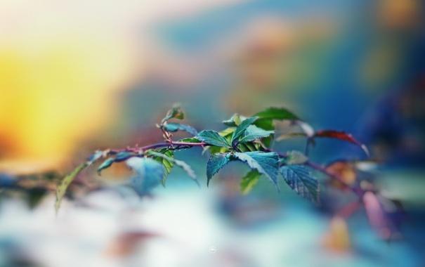 Фото обои листья, макро, растение, ветка, размытость, leaves, macro