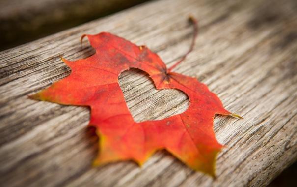 Фото обои лист, дерево, сердце