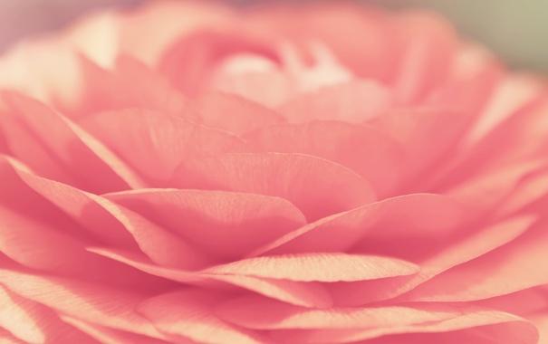 Фото обои цветок, макро, лепестки, бутон, лотос