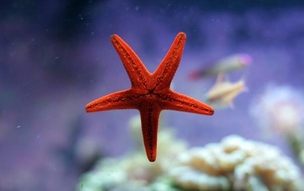 Фото обои море, вода, обои, звезда