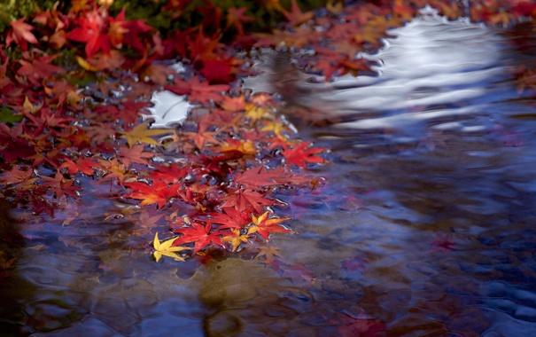 Фото обои осень, листья, вода, ручей, ветка