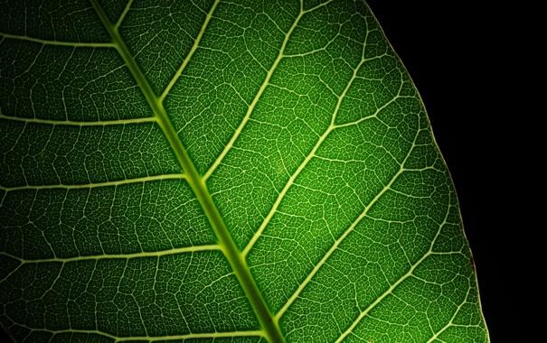 Фото обои green, leaf, black