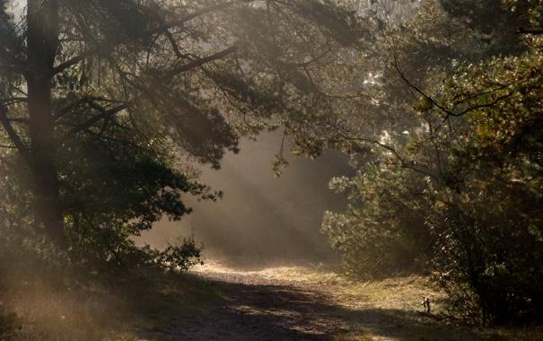 Фото обои дорога, осень, свет, деревья, природа