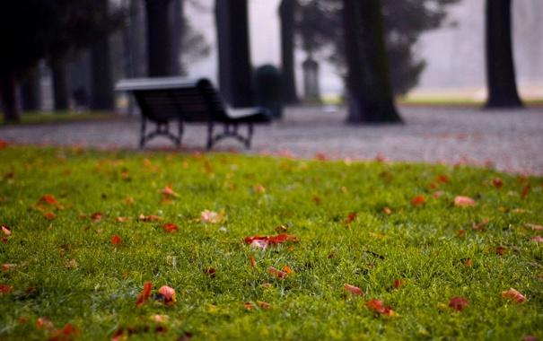 Фото обои зелень, трава, листья, природа, парк, фото, фон
