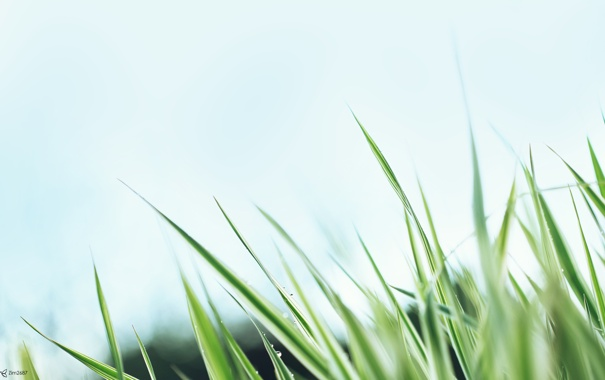 Фото обои трава, небо, макро