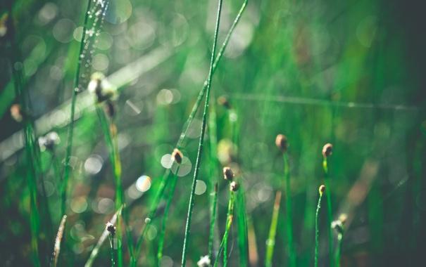 Фото обои капли, блеск, трава, блики, утро, макро