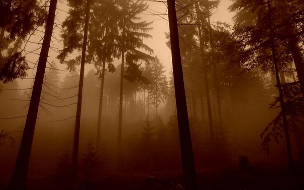 Фото обои лес, деревья, природа, обои, фотографии