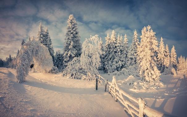 Фото обои зима, лес, снег, деревья, забор, ели, изгородь