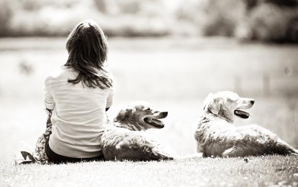 Фото обои собаки, природа, белое, Девушка, girl, черно, dogs