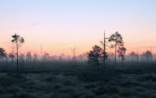 Фото обои лес, пейзаж, природа, туман, утро