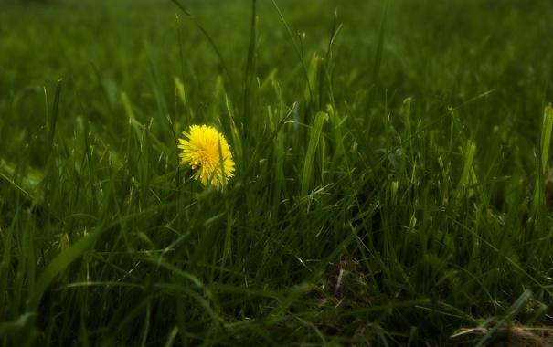 Фото обои трава, макро, цветы, природа, фото, обои