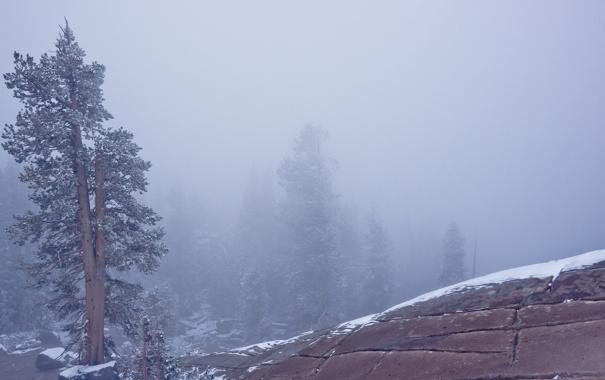 Фото обои пейзаж, природа, туман, дерево, гора