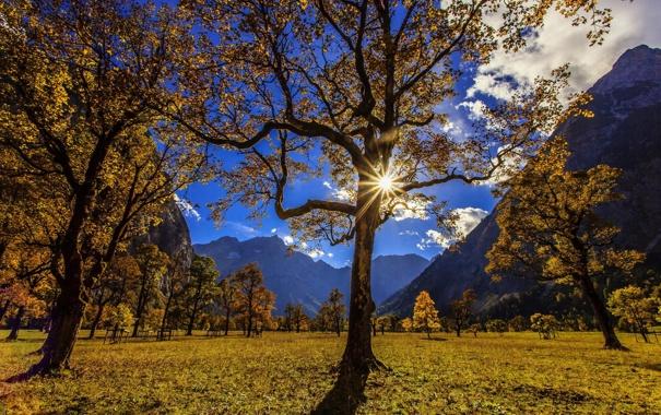 Фото обои лето, солнце, пейзаж, горы, природа, дерево