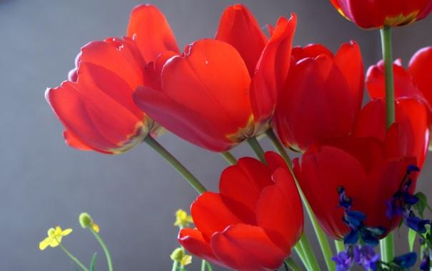 Фото обои солнце, цветы, тюльпаны