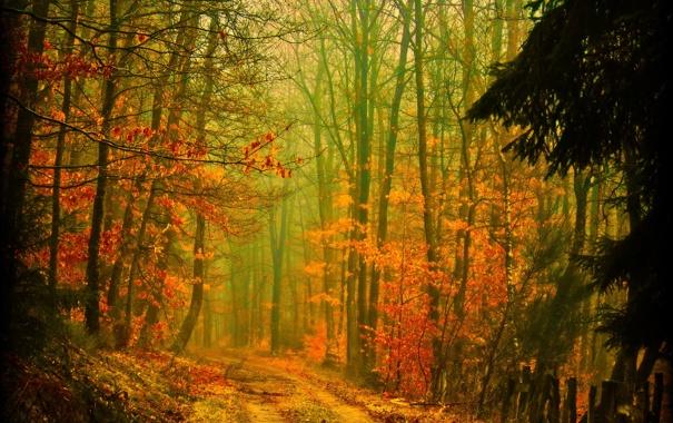 Фото обои дорога, осень, лес, деревья, природа, листва