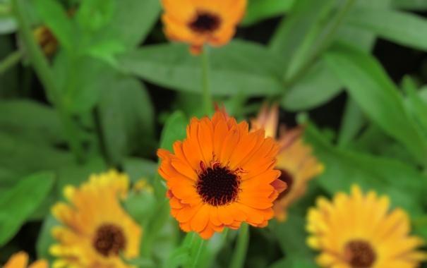 Фото обои цветы, обои, оранжевые