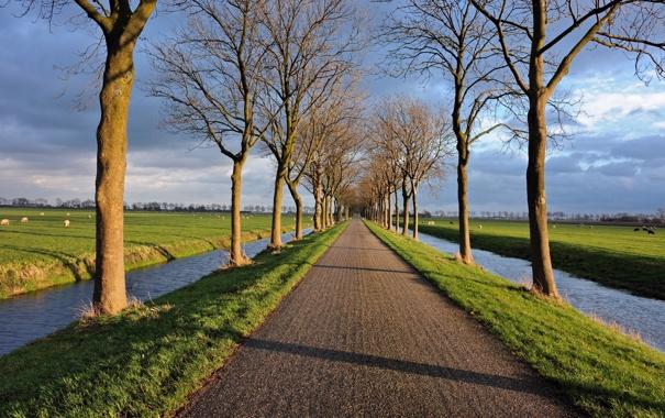 Фото обои дорога, деревья, пейзаж, канал