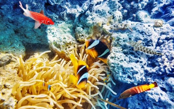 Фото обои рыбки, океан, world, подводный мир, underwater, ocean, fishes
