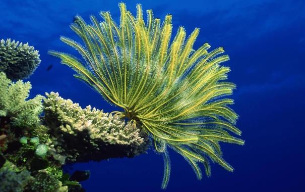 Фото обои море, морское дно, анемоны