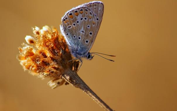 Фото обои бабочка, стебель, насекомое