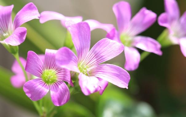 Фото обои цветы, природа, растение, лепестки