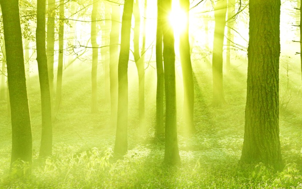 Фото обои лес, солнце, лучи, свет, деревья, закат, дымка