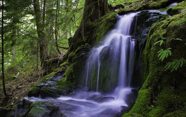 Фото обои лес, природа, ручей, водопад