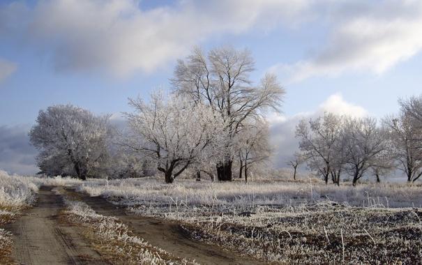 Фото обои зима, дорога, поле, деревья