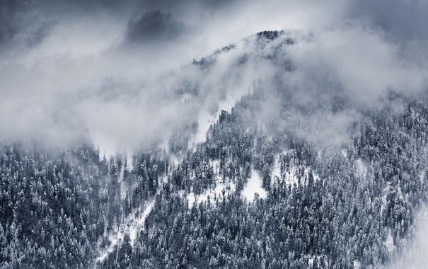Фото обои зима, облака, снег, деревья, пейзаж, природа, обои