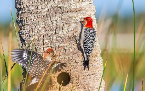 Фото обои птицы, дерево, краски, перья, дятел, ствол