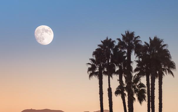 Фото обои небо, деревья, пальмы, луна