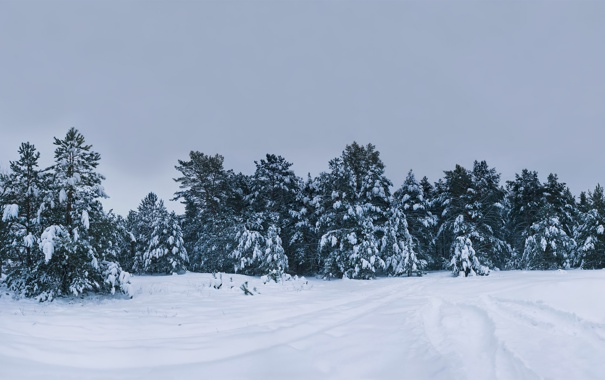 Фото обои зима, снег, деревья, природа, фото, дерево, картинки