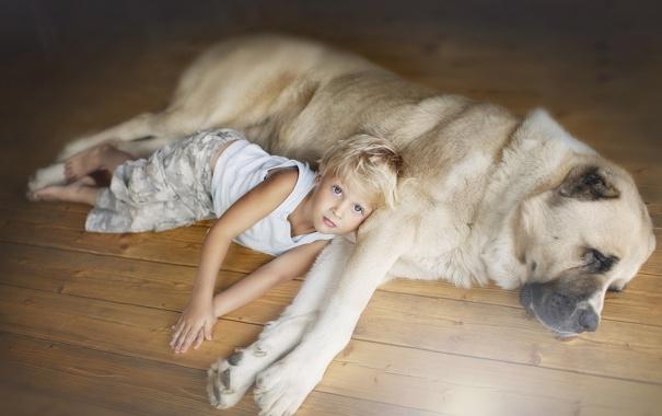 Фото обои друг, ребенок, взгляд, собака