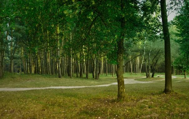 Фото обои лес, лето, зелёный, тропинка