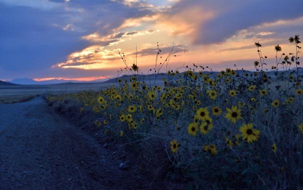 Фото обои дорога, пейзаж, цветы, ночь