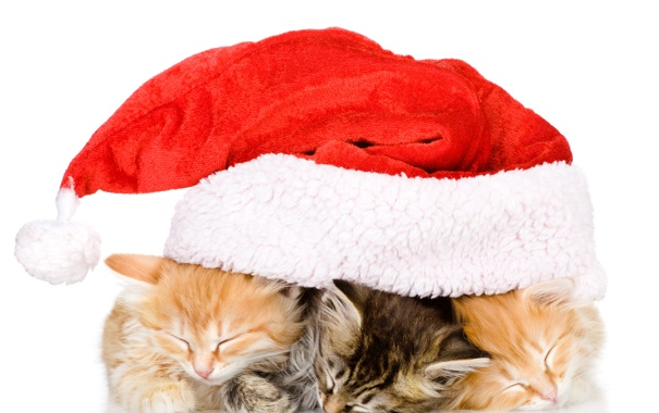 Фото обои кот, кошки, котенок, christmas, new year, праздники, новогодняя