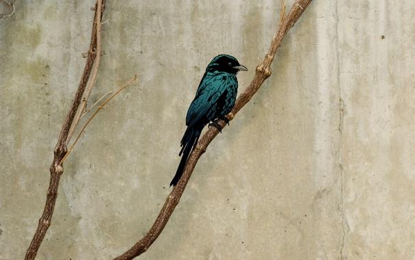 Фото обои ветки, птица, обои, минимализм, картинка, изображение