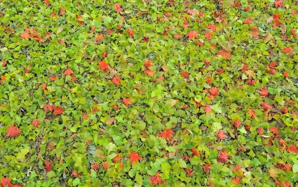 Фото обои осень, листья, природа, листва, текстура, Nakajima Park