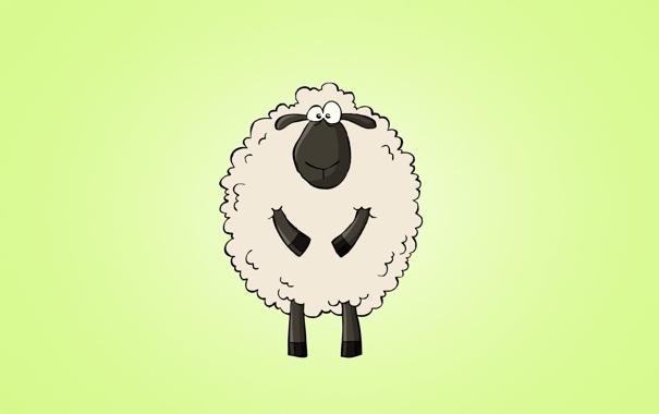 Фото обои животное, светлый фон, sheep, овца, изумительный взгляд