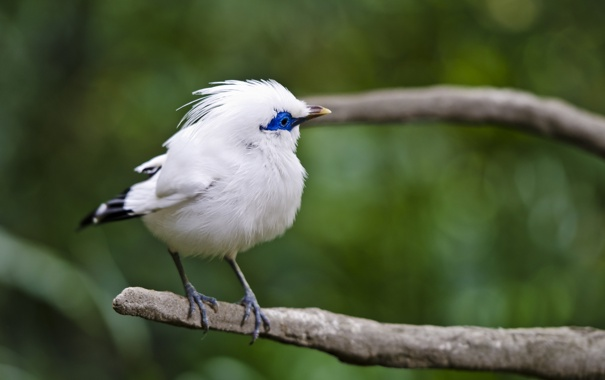 Фото обои фон, птица, ветка, белая