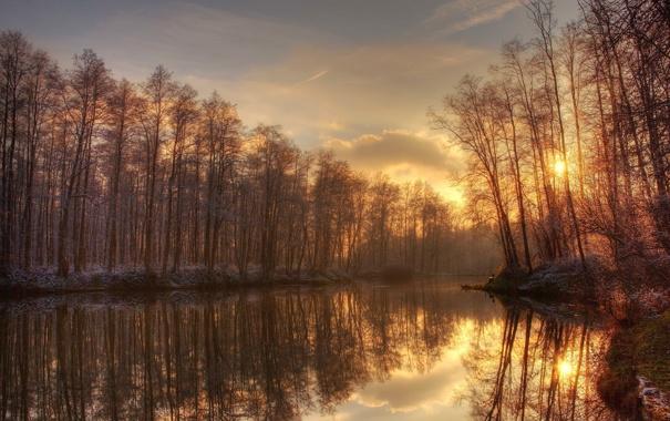Фото обои иней, лес, деревья, река, утро, золотое