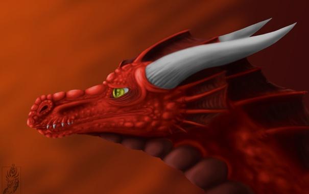 Фото обои взгляд, морда, красный, фантастика, дракон, арт, рога