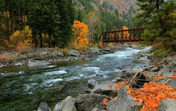 Фото обои осень, лес, горы, мост, река
