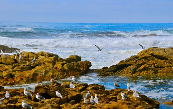 Фото обои волны, птицы, камни, побережье, чайки, Атлантический океан