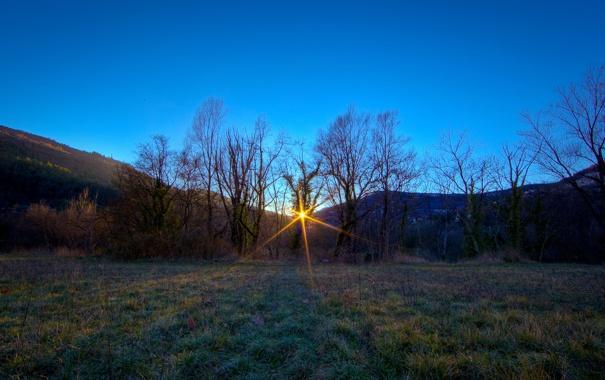 Фото обои солнце, лучи, деревья, полянка